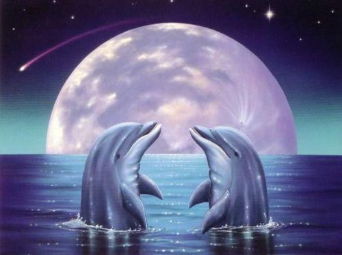Pin De Kaitlyn Rager En Dolphins Pinterest