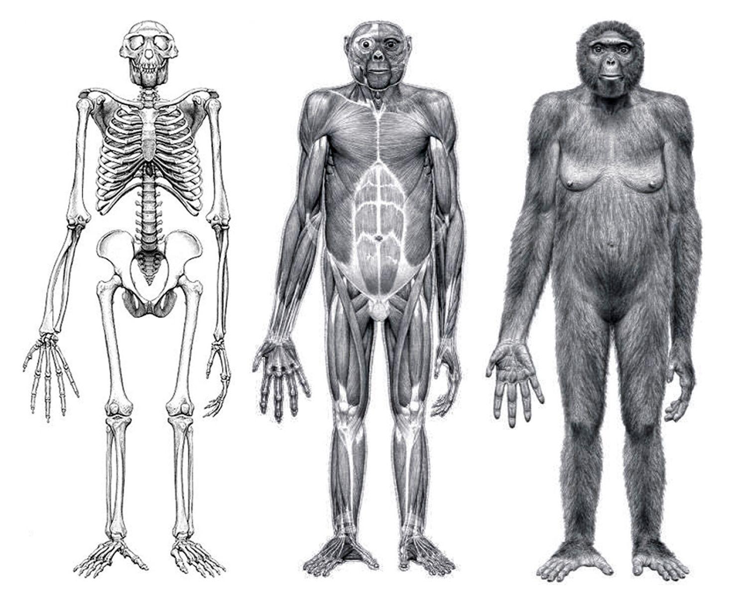Картинки предка человека