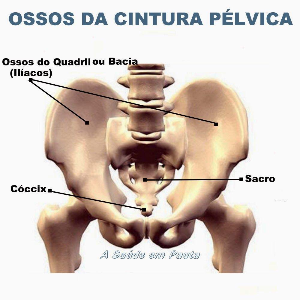 Ossos da cintura pélvica ou pélvis | OSSOS | Pinterest | Anatomía