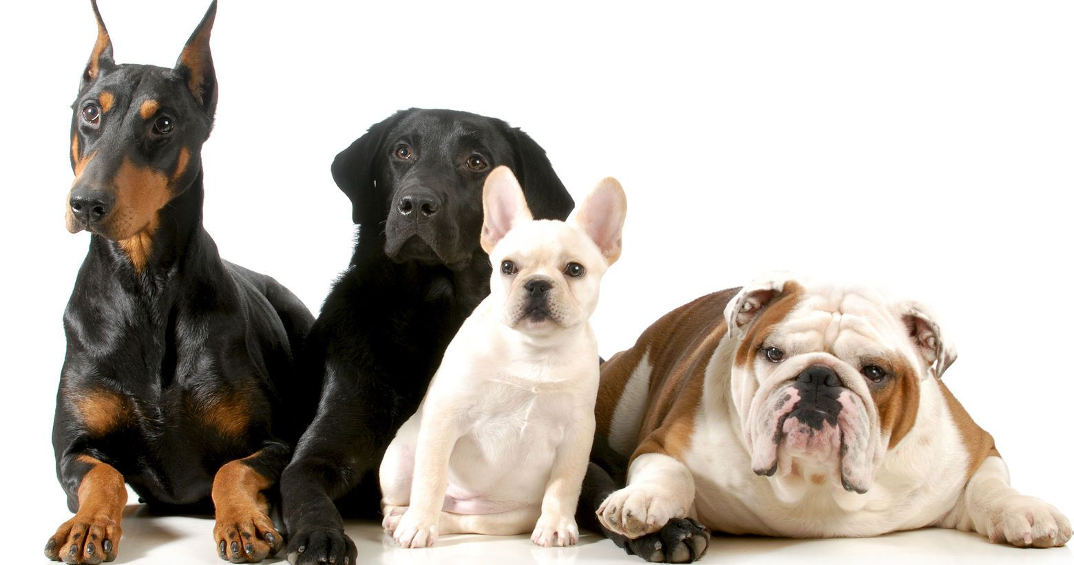 What S The Best Dog Breed For You To Get Dog Breed Quiz Dog