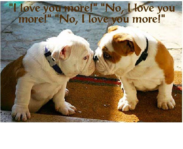 I Love You More With Images Cute Animals Cute