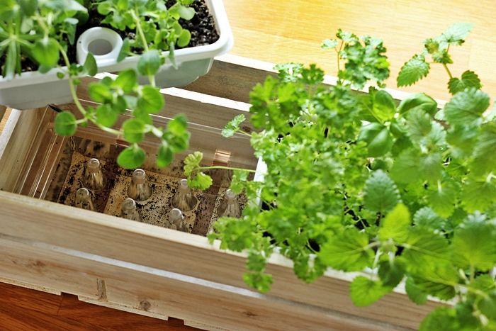 So Legst Du Einen Krautergarten In Der Kuche An Krautergarten Anlegen Garten Und Petersilie Pflanzen