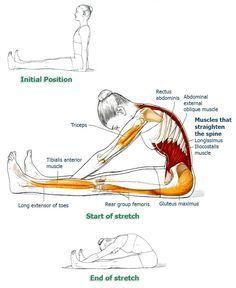 stretches for upper back and back pain relief exercício pilates e