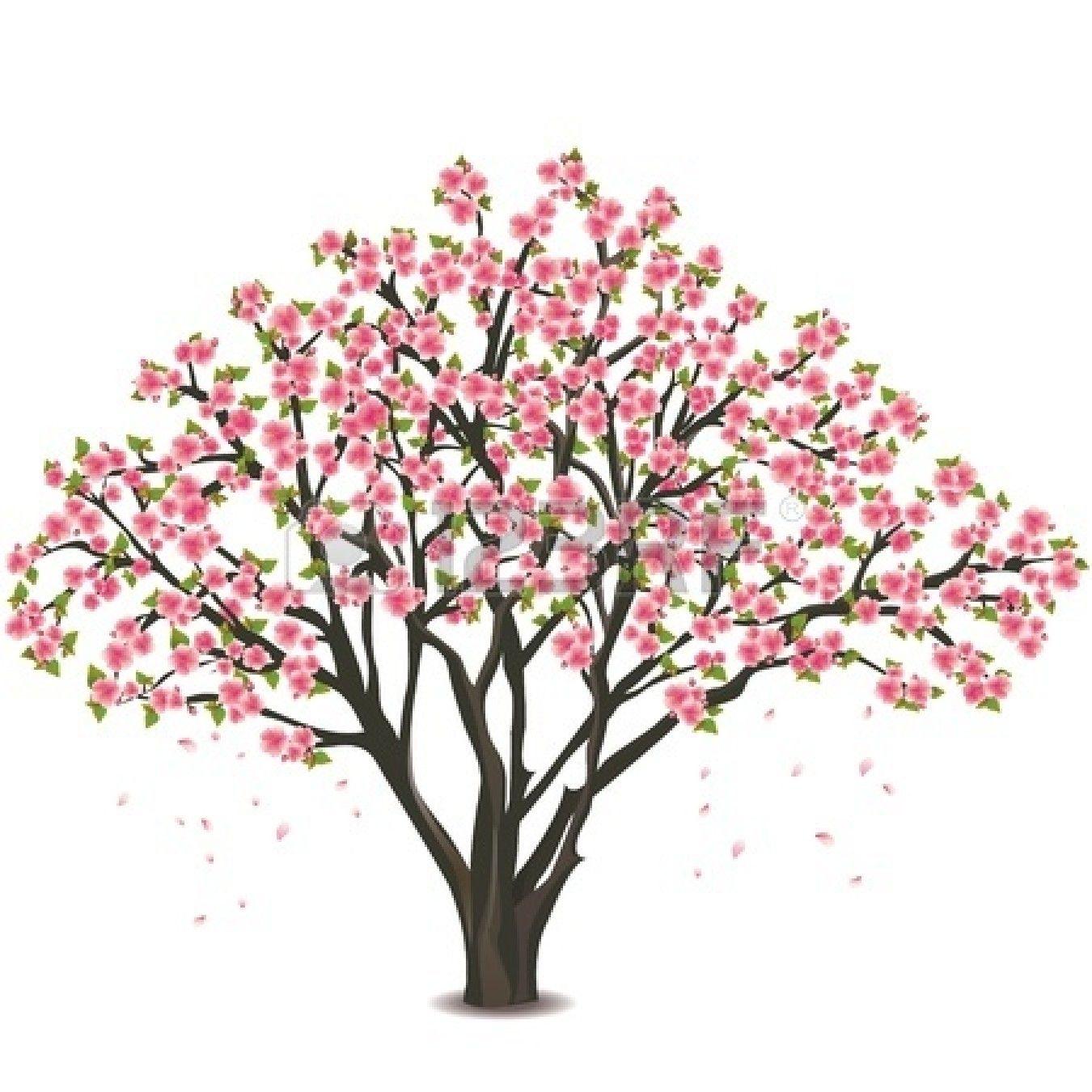 Sakura Blossom Japanese Cherry Tree Isolated On White Background Japanese Cherry Tree Tree Drawing Watercolor Trees
