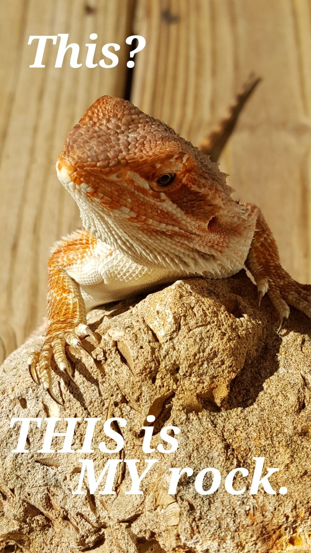 Wizard Humor Lizards Pinterest Bearded Dragon Reptiles And