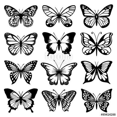"Download The Royalty-free Vector ""Butterfly Vector Set"