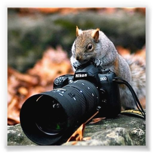 Funny Squirrel Taking Photo Photo Print