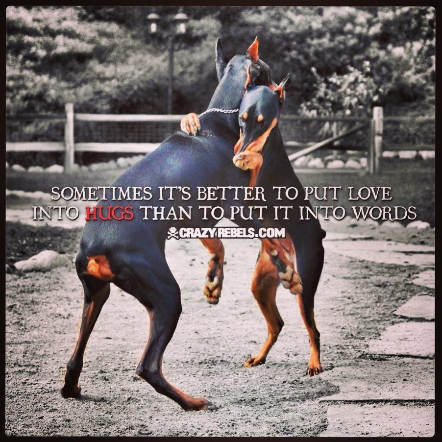 I Am All Too Familiar With Doberman Sass Lol With Images