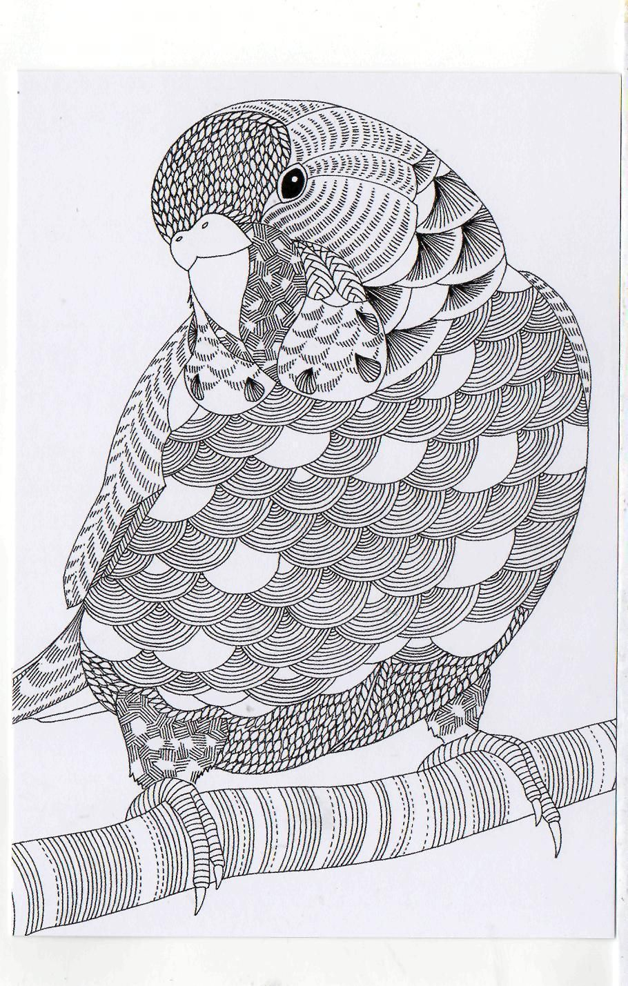 Millie Marotta\'s Colouring in Card - Parrot | Aves para Bordar y ...