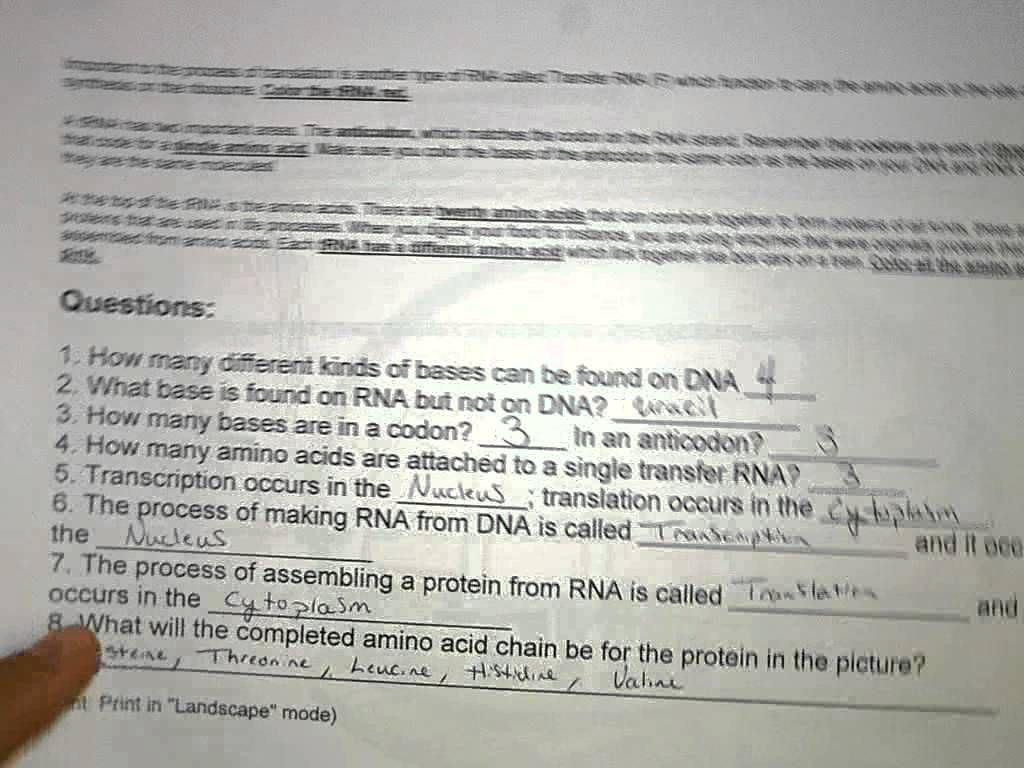 Worksheet Colored Dna Coloring Transcription And