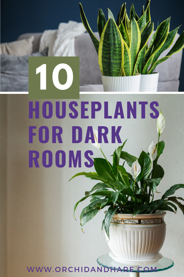 10 Best House Plants For Dark Rooms Find Out Which Are 400 x 300