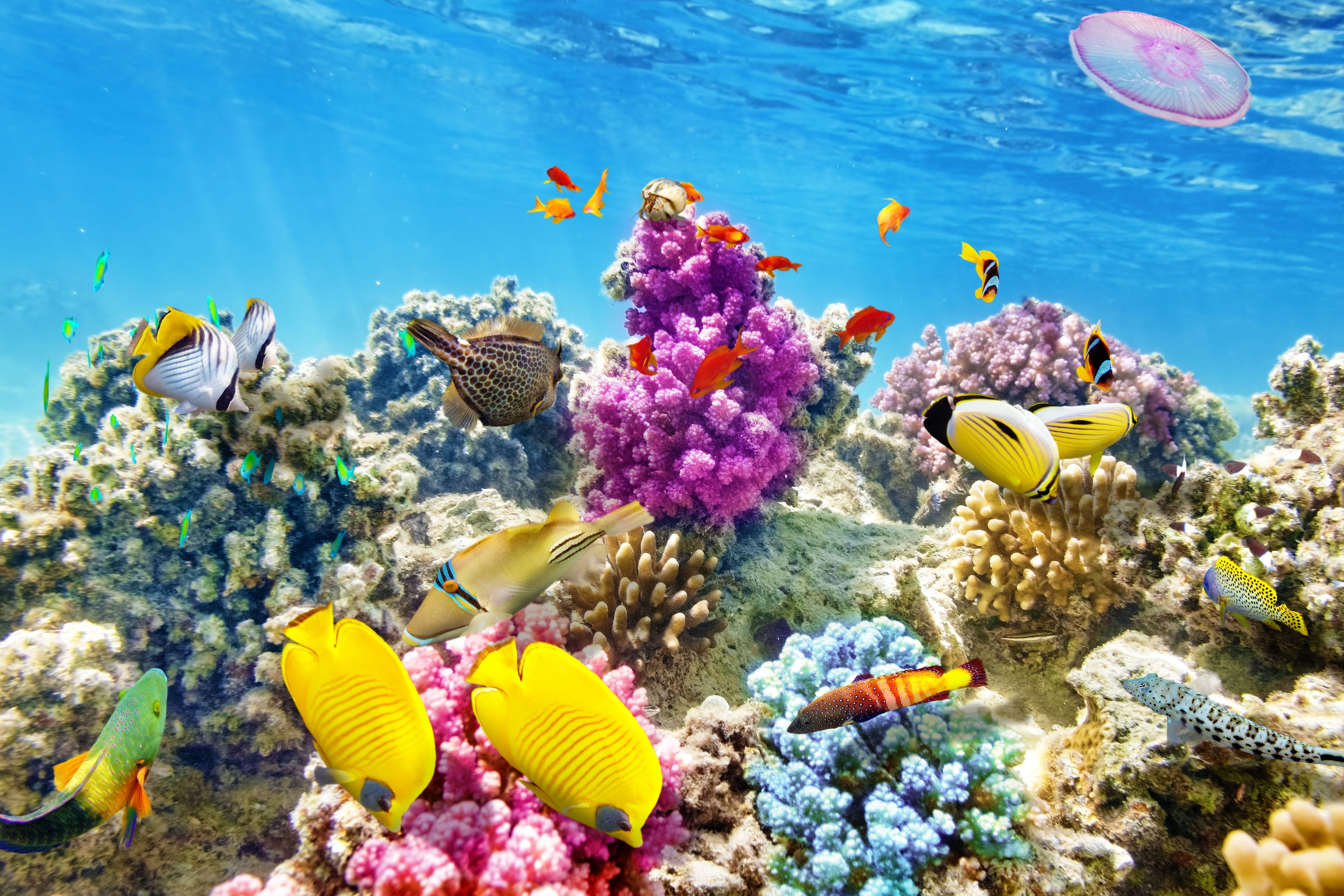 Fish The Ocean World Underwater World Underwater Ocean Fishes Tropical Reef Coral Coral Reef 5k Wallpape Ocean Underwater Tropical Fish Ocean Fishing