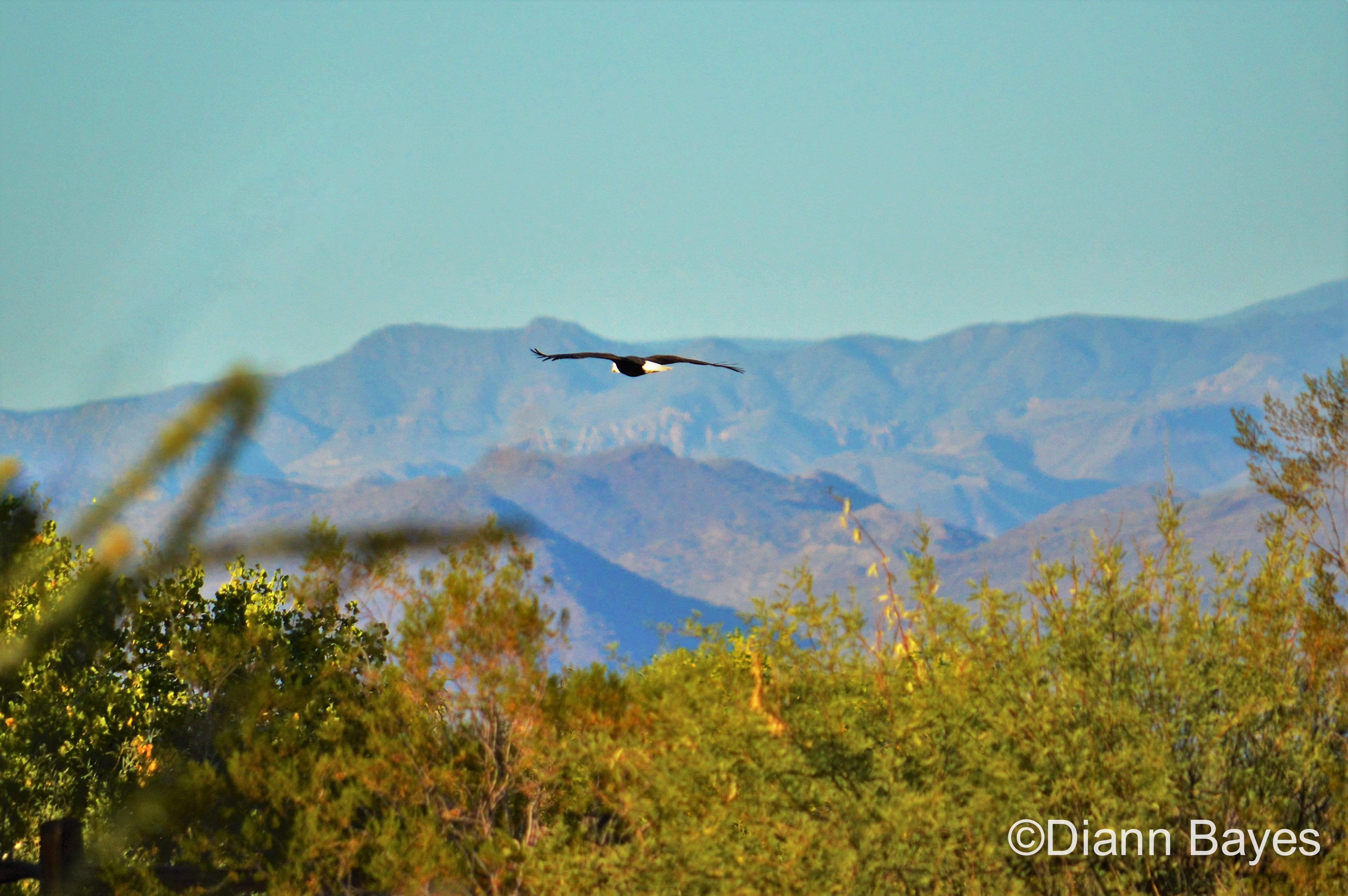 Eagle View RV Resort in Fort McDowell, Arizona www