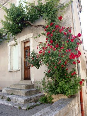 .love climbing roses