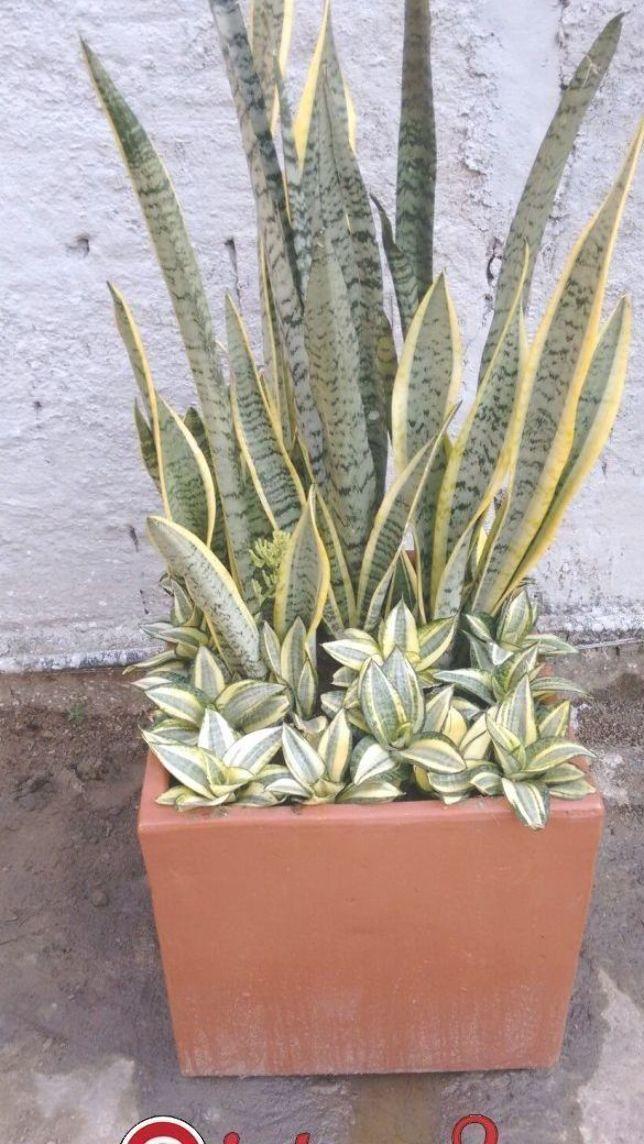 #interesting #succulents #succulent #gardening #garden