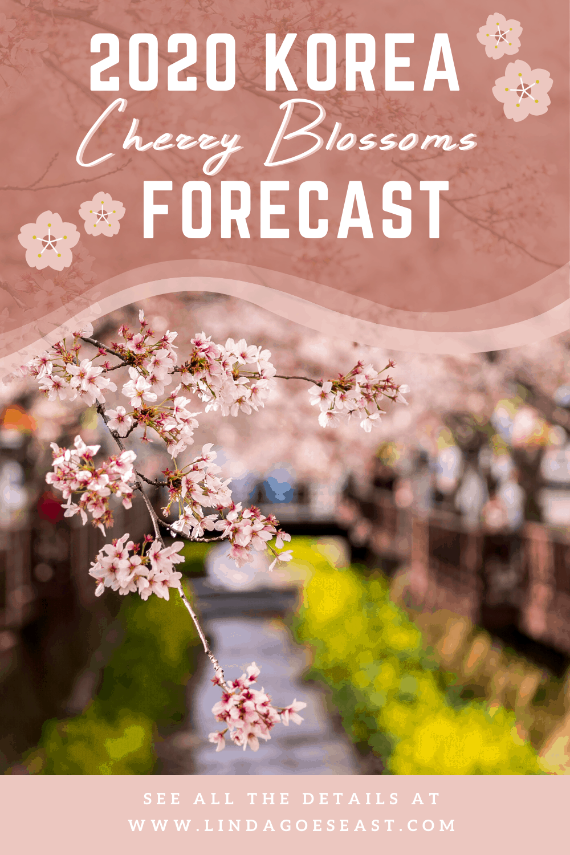 2020 Korea Cherry Blossoms Forecast Where And When To Visit Asia Travel South Korea Travel Korea Travel