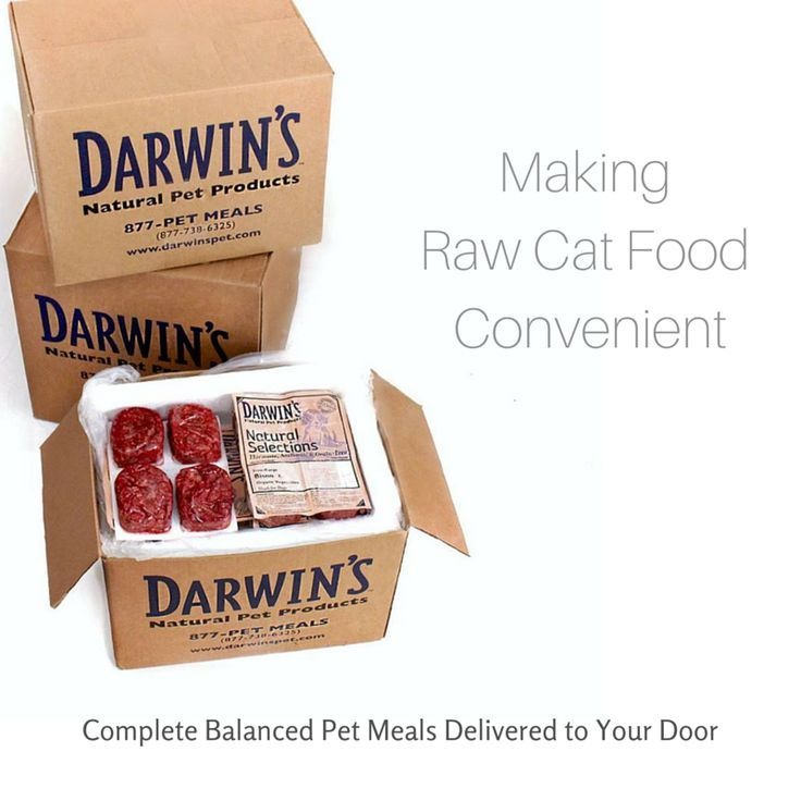Darwins natural pet products delivering raw pet food