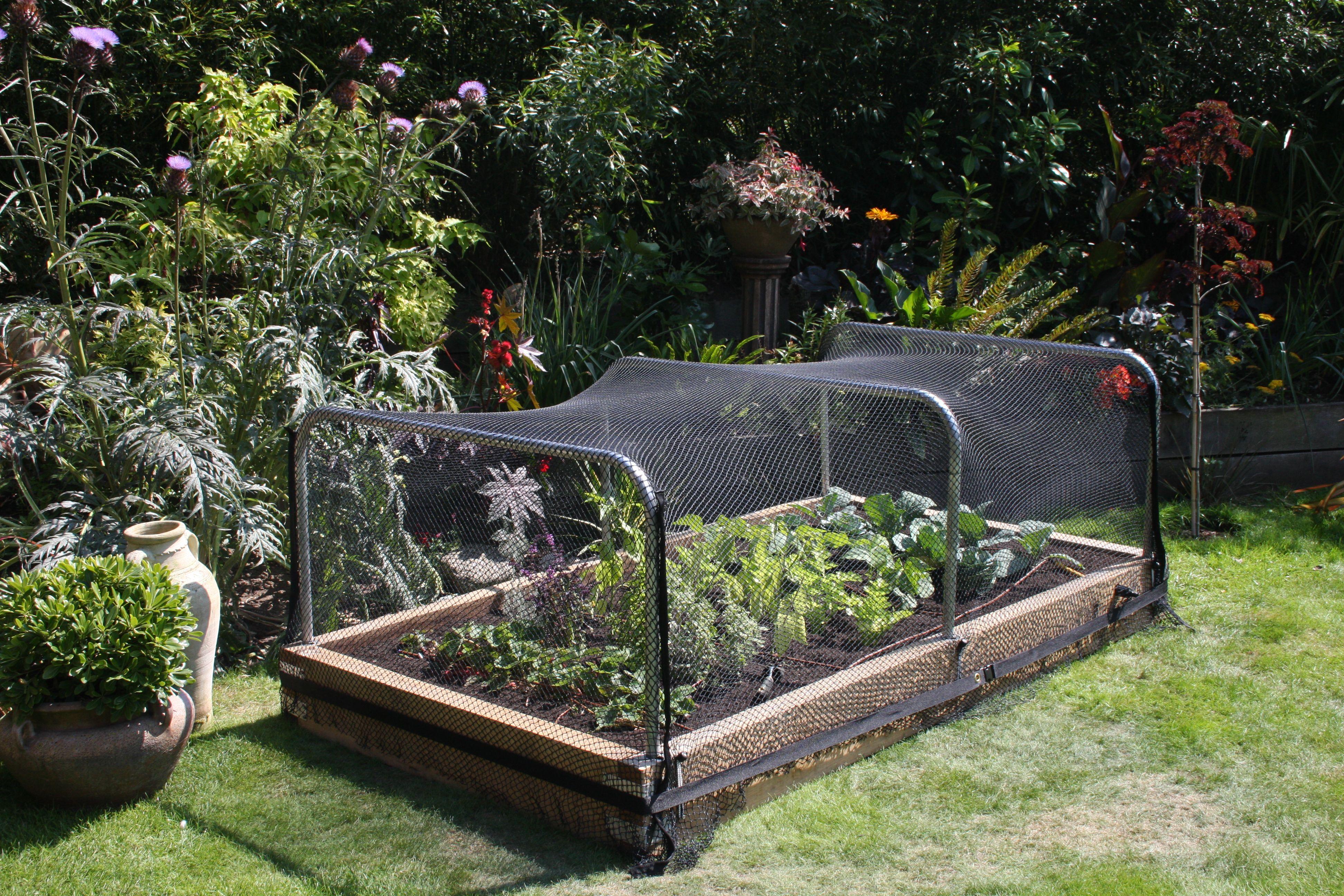 Raised Bed Garden Bird Netting Garden enclosure ideas