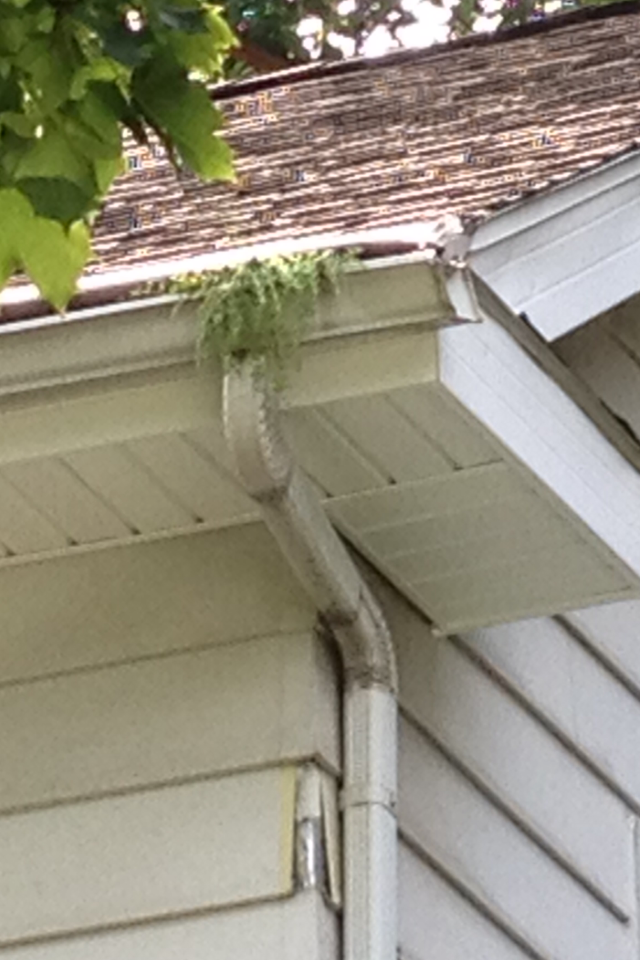 Look Closely And Discover The Gutter Garden That Is Now Growing Out Of This Helmet Hood System Fail Get The B Gutter Garden Cleaning Gutters Gutter Guard