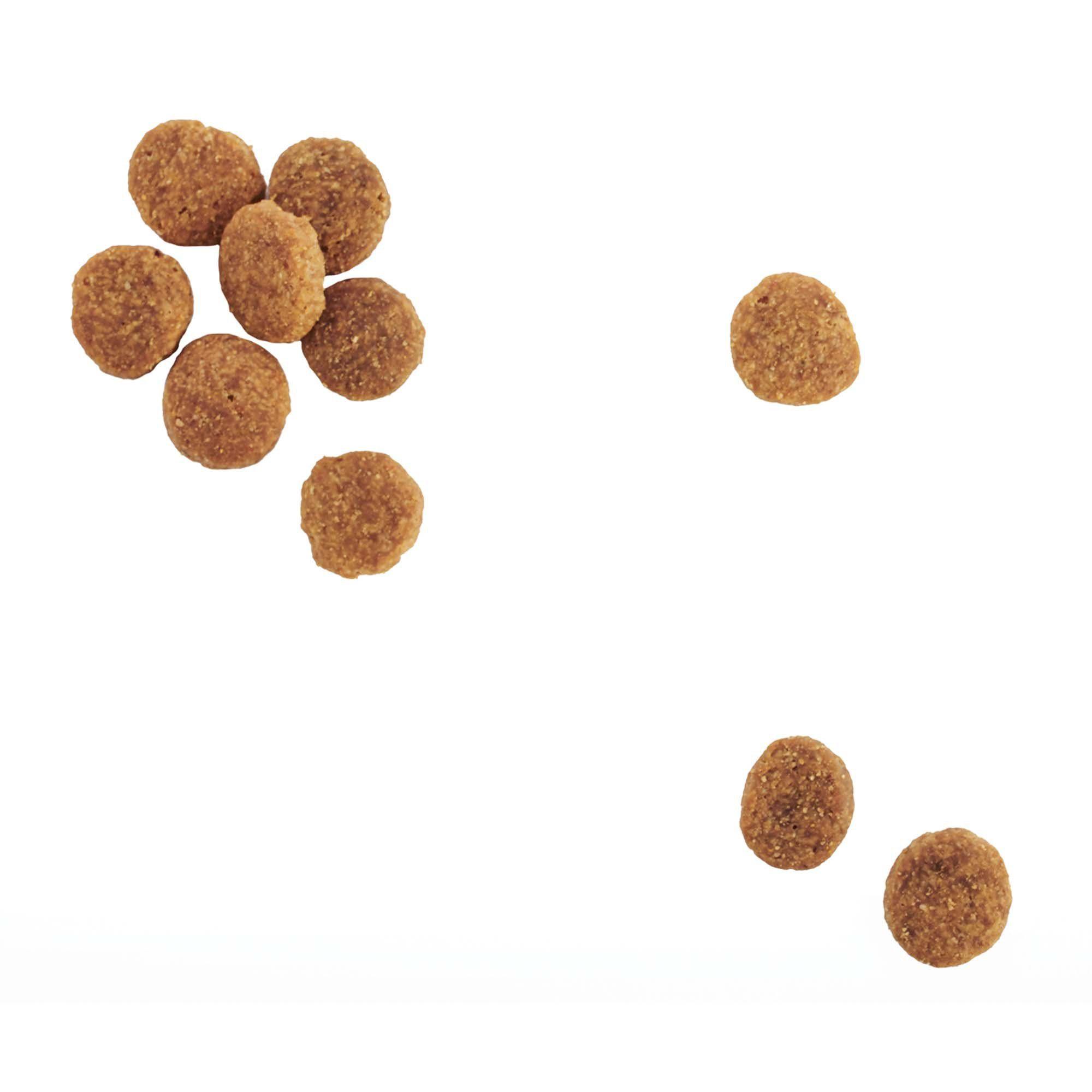 Wholehearted Grain Free Skin And Coat Care Pea And Salmon Recipe Dry Dog Food 5 Lbs Petco Dog Food Recipes Dry Dog Food Salmon Recipes