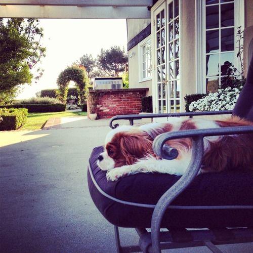 Dear Mom Love Finley Cavalier King Charles Dog King Charles Dog Cavalier Puppy
