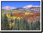 Colorado Forests