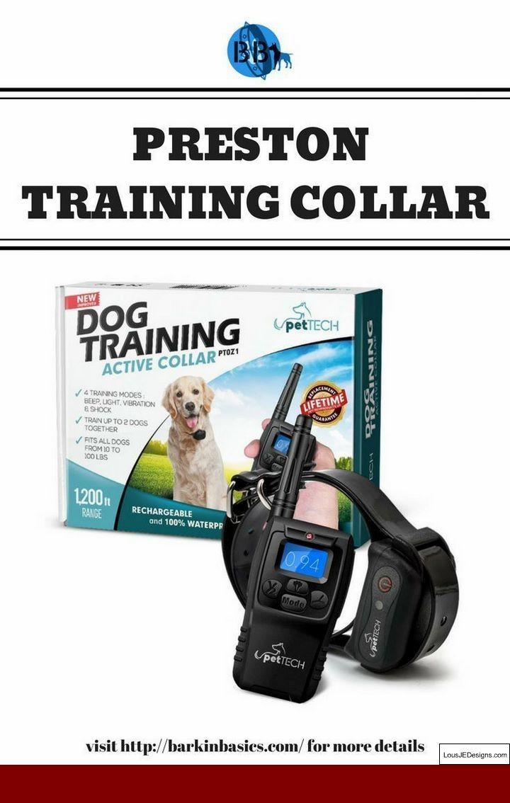 Teaching Your Dog To Stay Outside And Pics Of How To Train Your