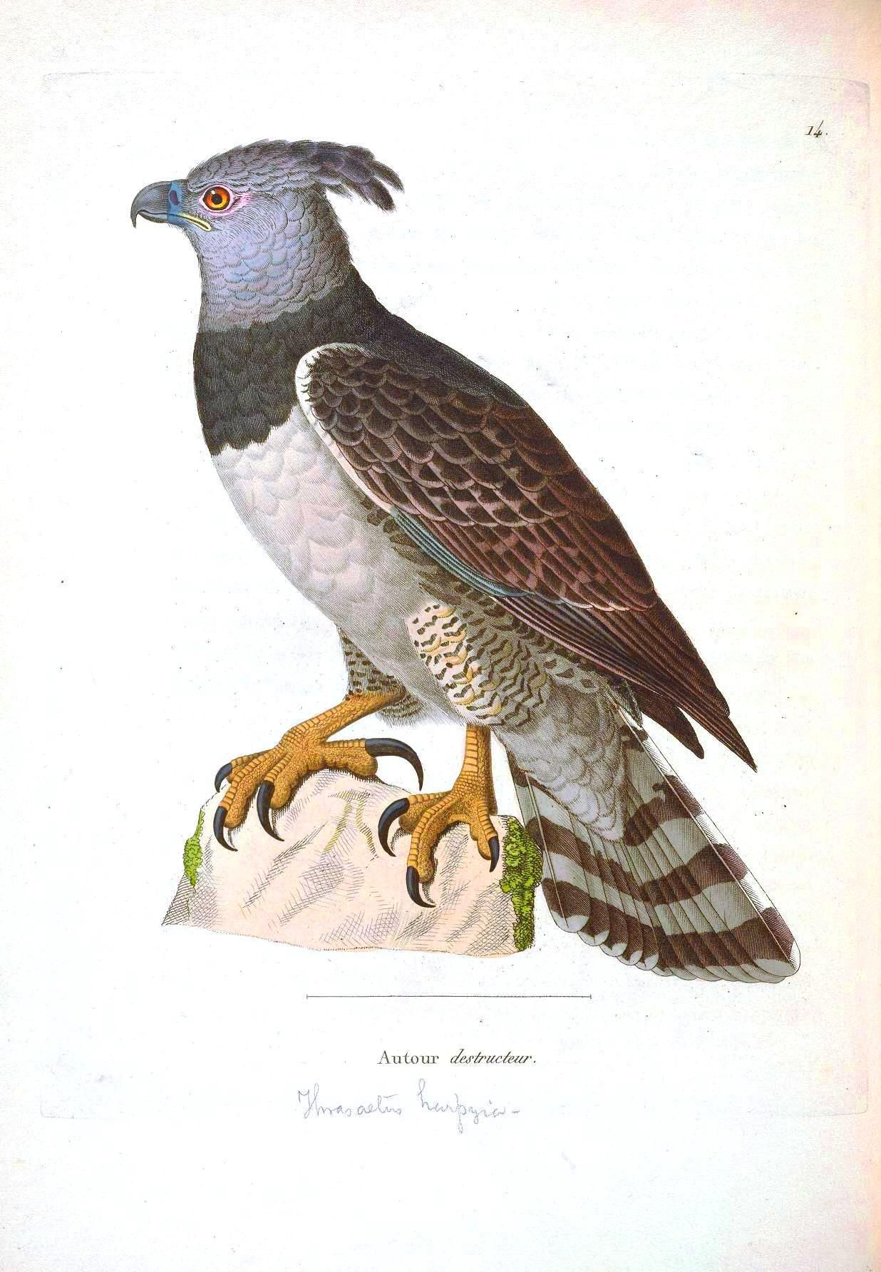 vintage printable - Printable Bird Pictures 2