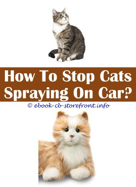 14 Gorgeous Cat Spray Remover Pet Odors In 2020 Cat Spray Male Cat Spraying Flea Spray For Cats
