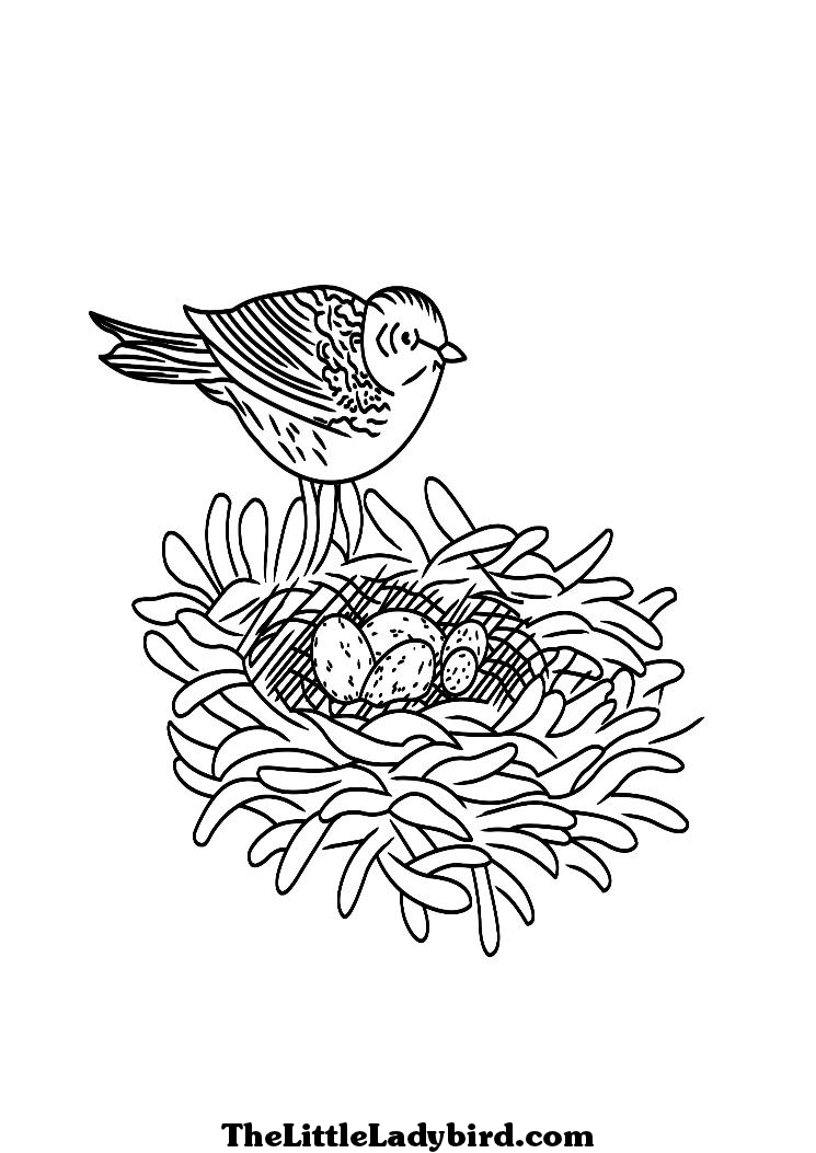 coloring page of a bird with nest and eggs