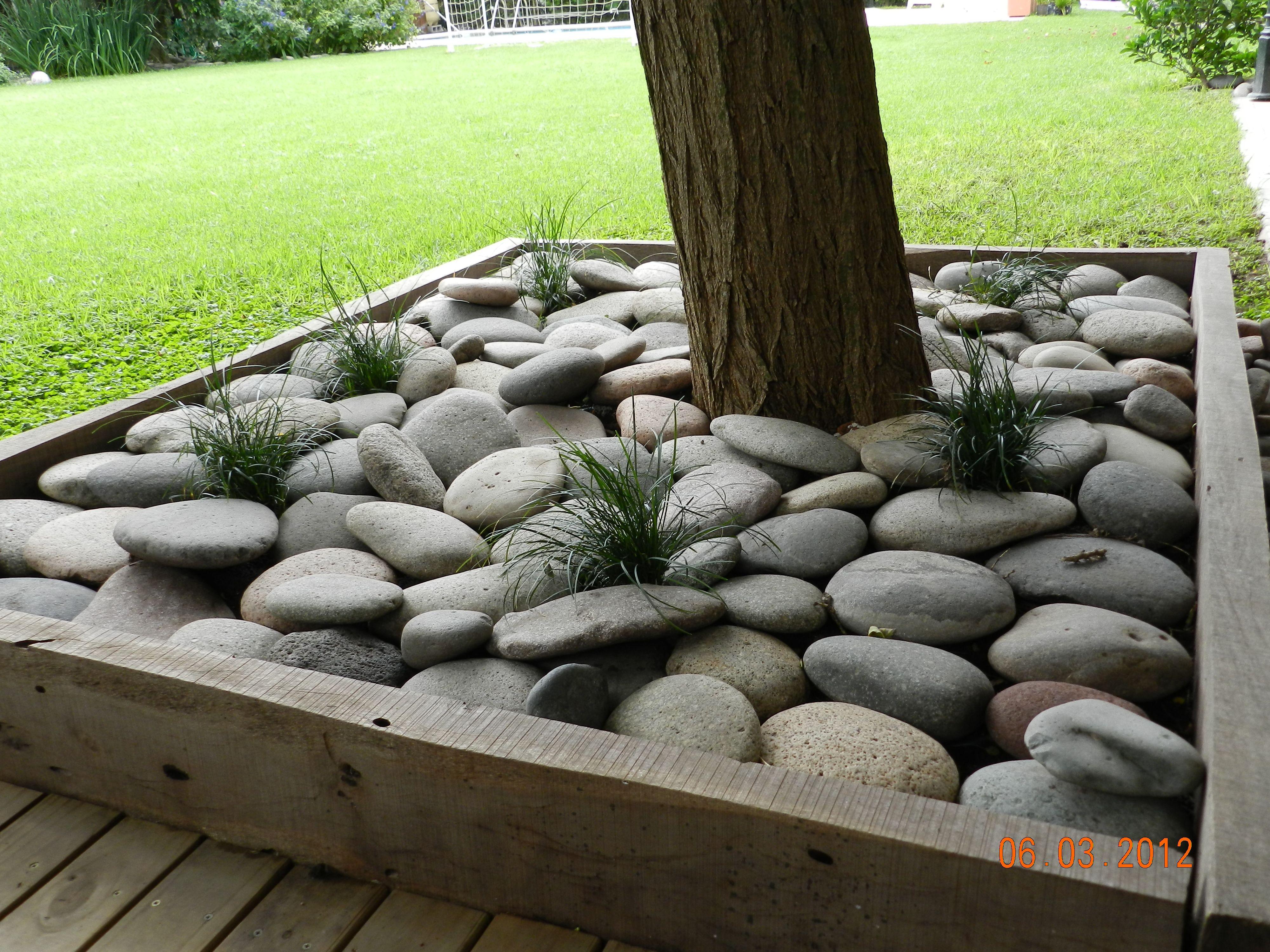Vestimos el pie del rbol con piedra bola y pasto ingles Decoracion de jardines con piedras y madera