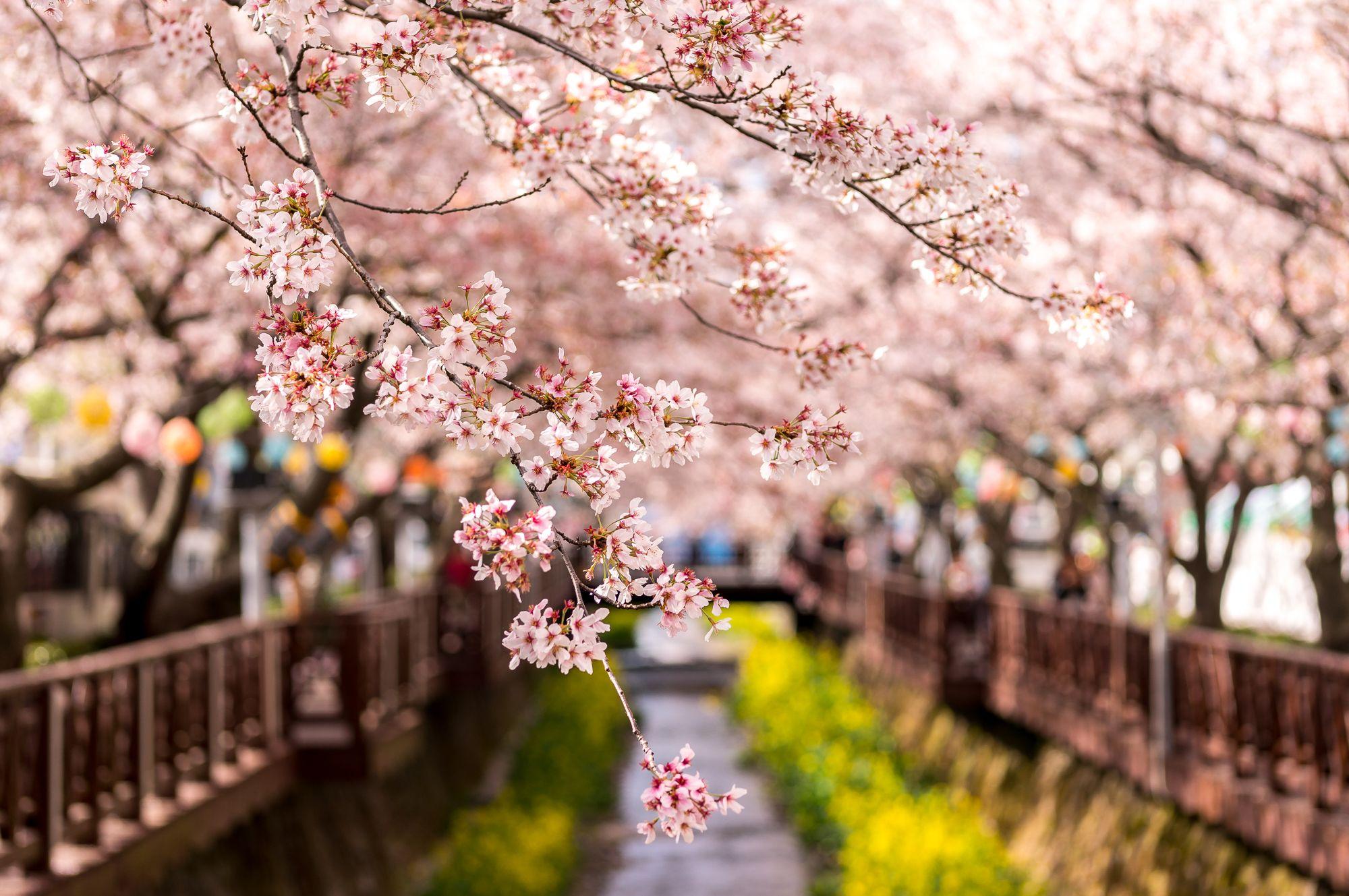Hasil gambar untuk korean spring