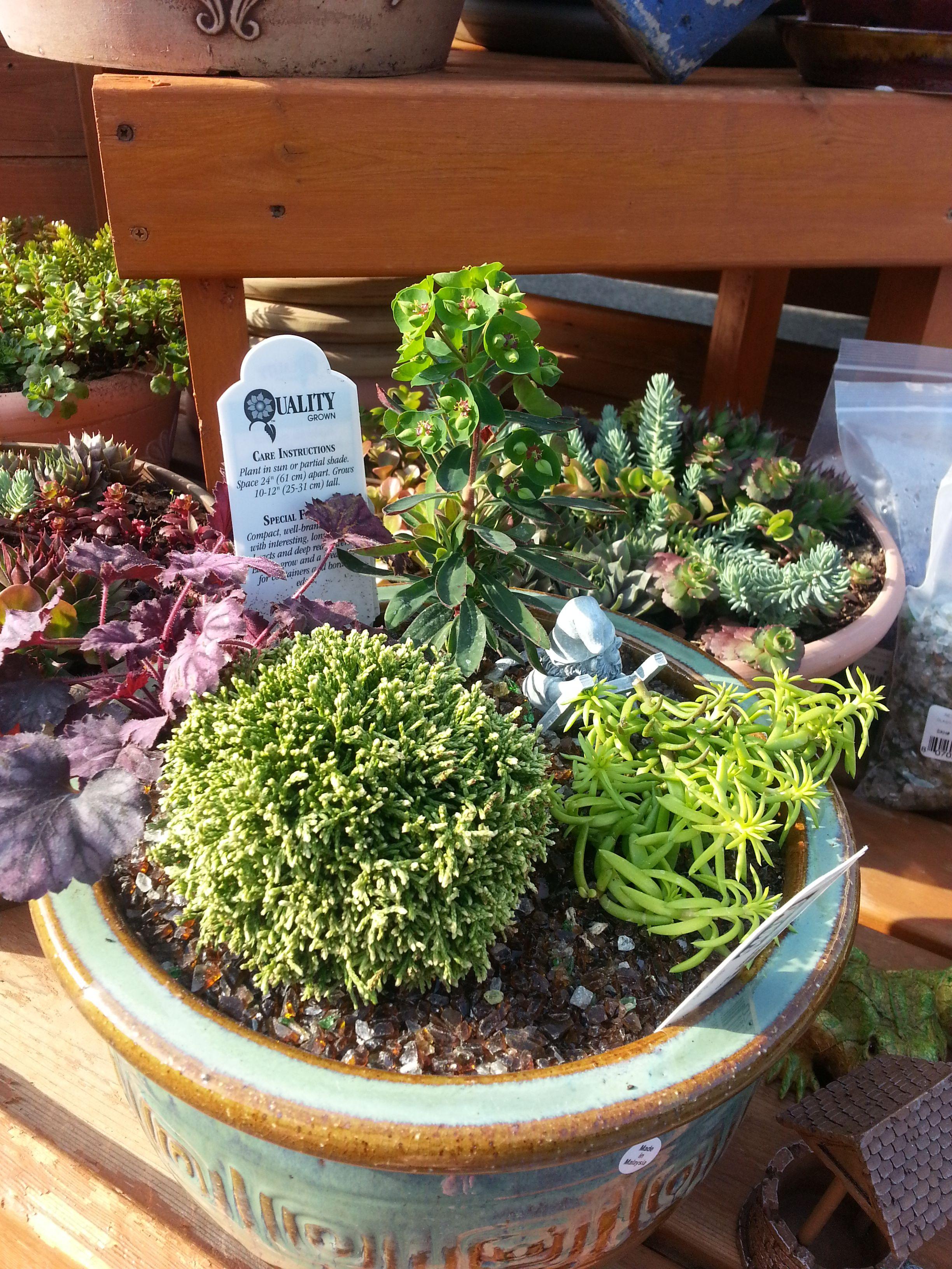 Visit Your Local Garden Store Garden Miniature Plants Garden