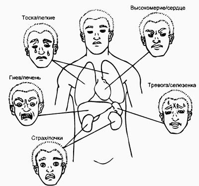 Связь органов и повреждающих их эмоций