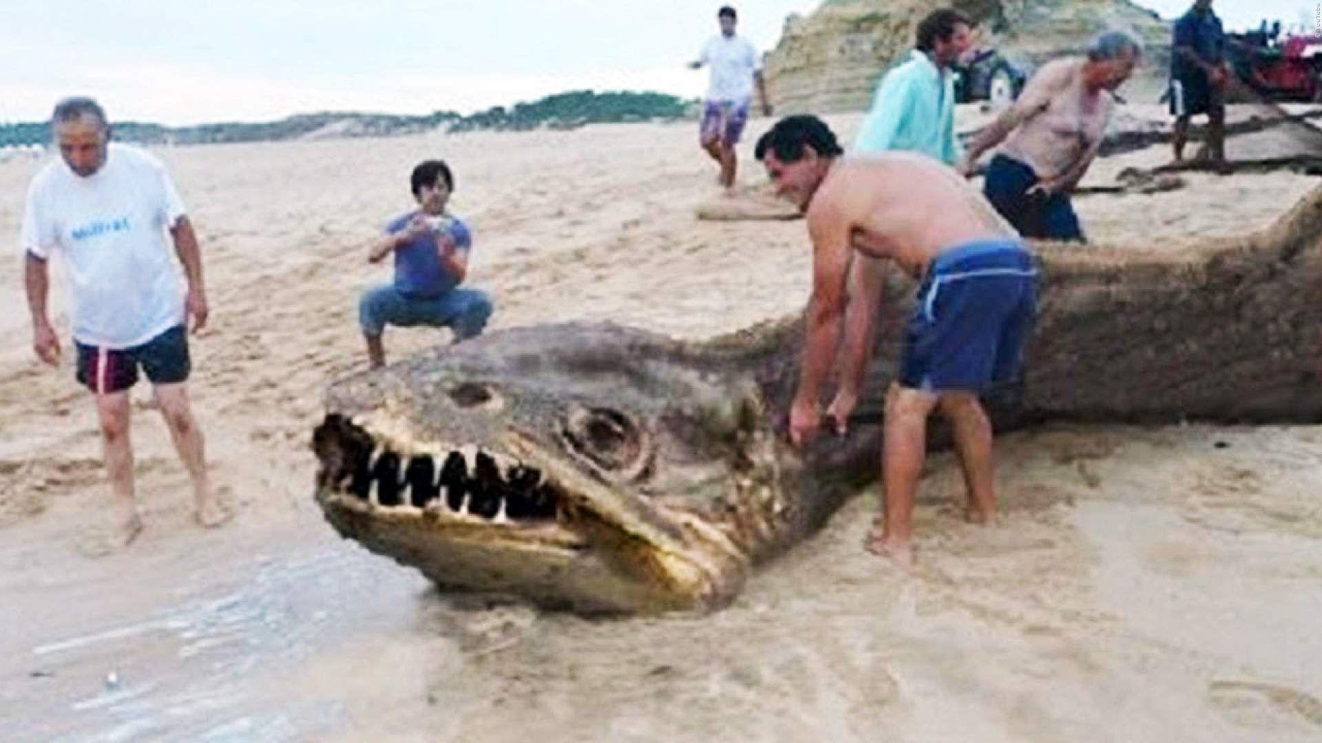 VIDEO: Diese 5 Monster aus dem Meer wurden mit der Kamera ...