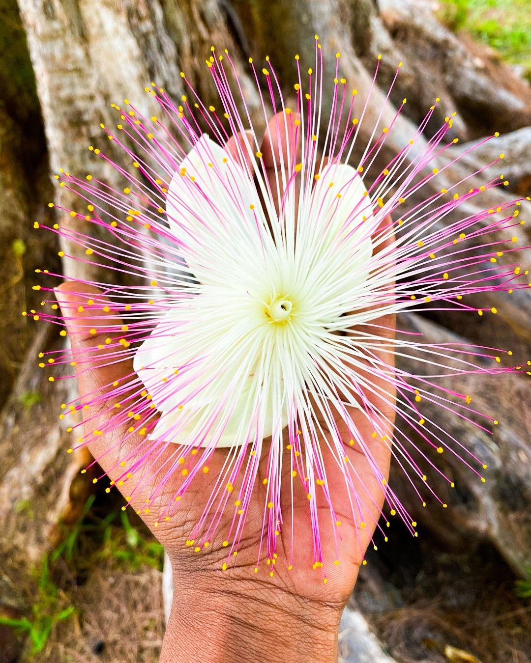 [𝔸𝕥𝕖𝕝𝕚𝕖𝕣 𝕚𝕟𝕤𝕥𝕒𝕘𝕣𝕒𝕥𝕚𝕥𝕦𝕕𝕖]  - Légèreté  ----------------------------------------------------  #365joursdinspiration #atelierinstagratitude #légèreté #coursphotographie #unephotoparjour #reunionnaisdumonde #defiphoto #fleurs #beautyofnature #enjoylittlethings #lanatureestbelle #flowers #instaflowers
