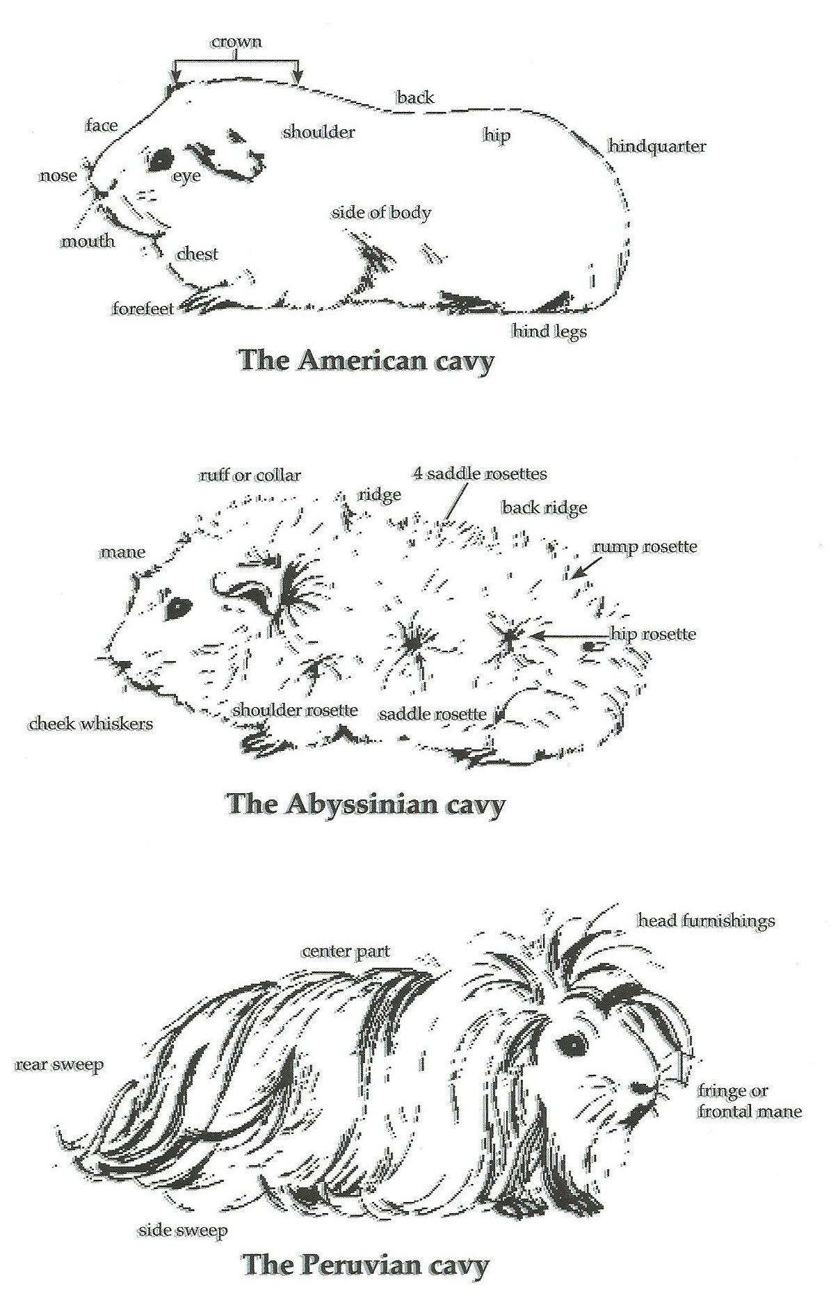Rabbit Anatomy Worksheet