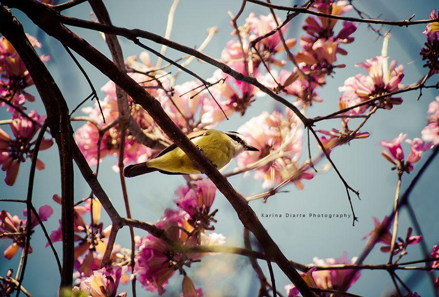 Naturaleza del Paraguay: Lapacho eterno