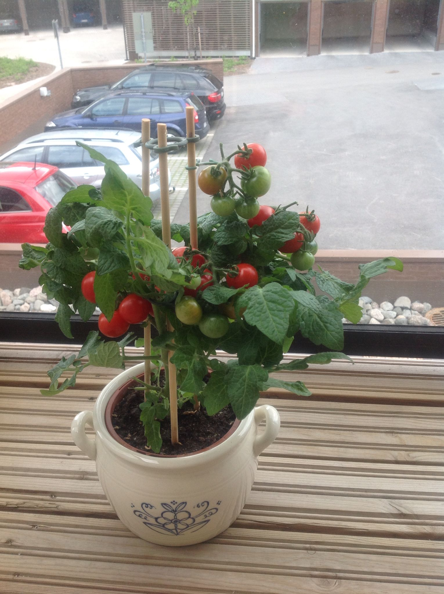 Oma tomaatti..