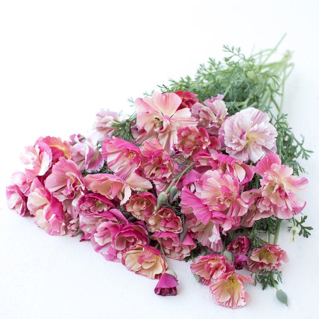 California Poppy Thai Silk Appleblossom Chiffon (With