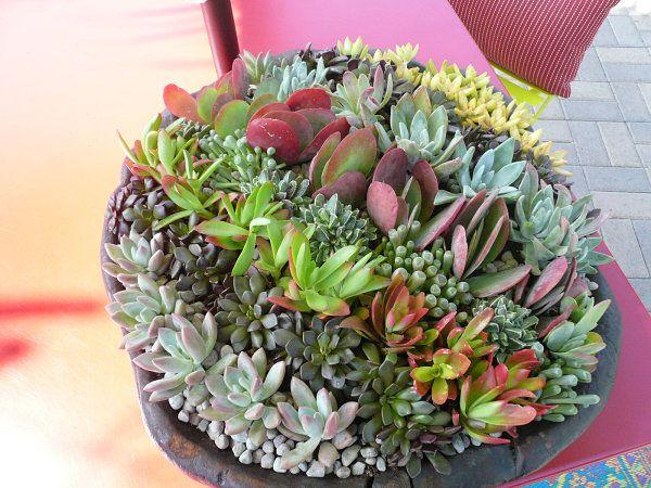 ideen für sukkulenten arrangements pflanzen   dekoideen - basteln, Hause und garten