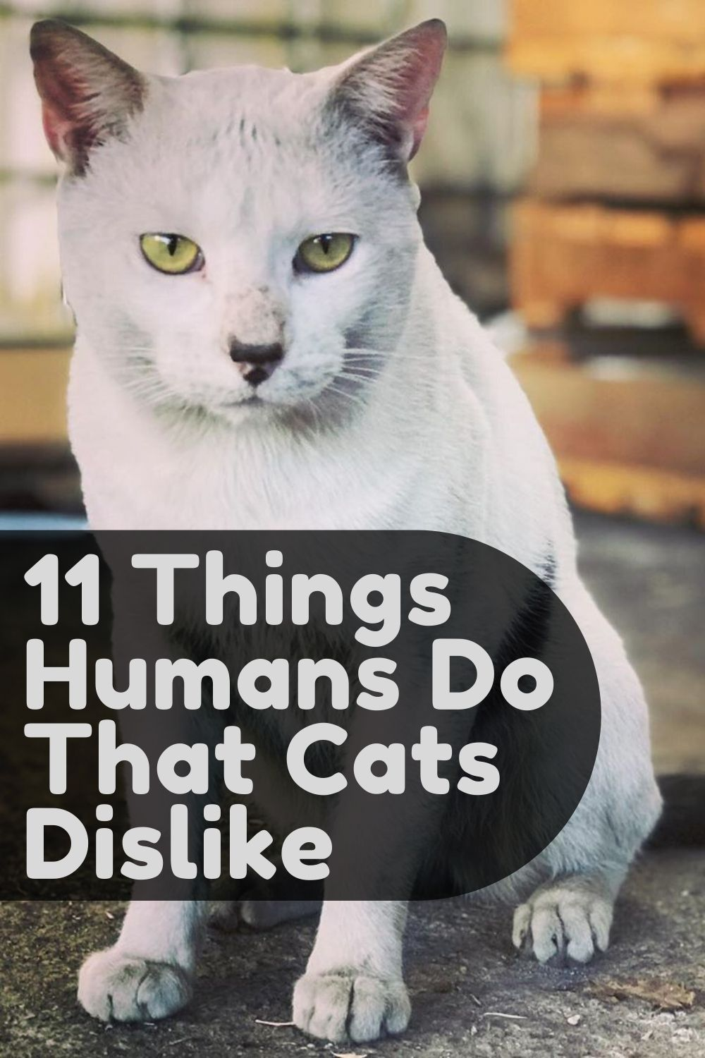 11 Things Humans Do That Cats Dislike Welfar4us in 2020