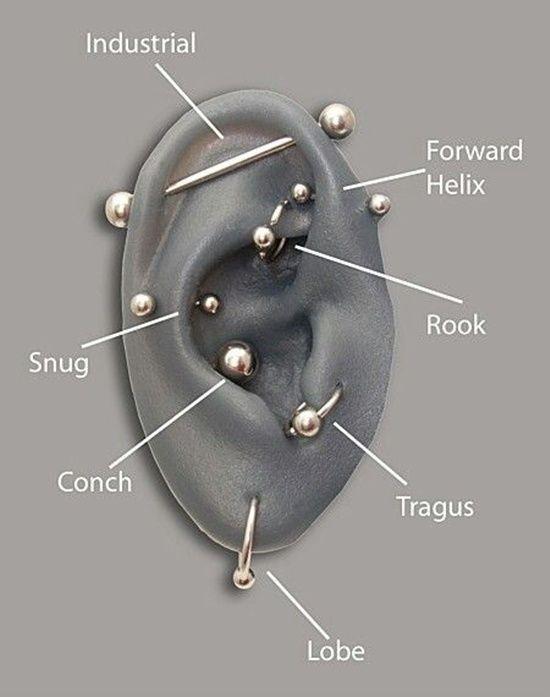 tragus piercing (8)