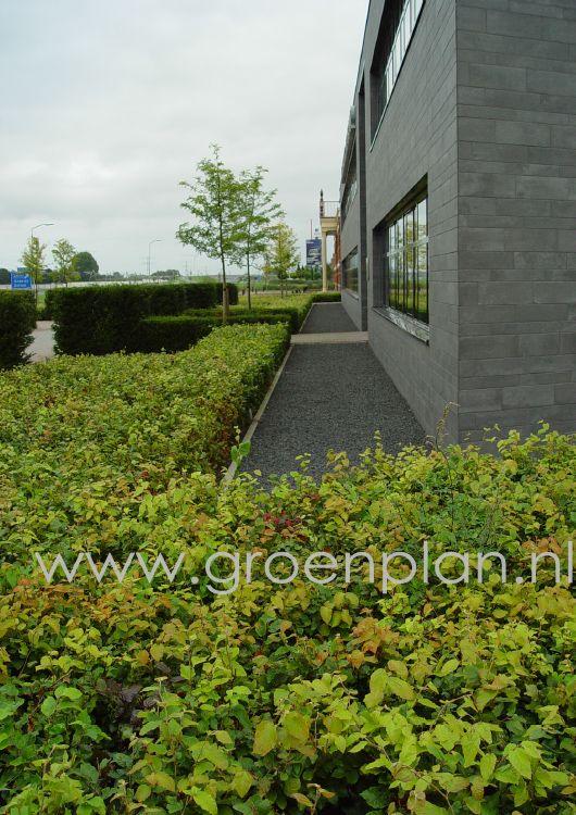 Groenplan - Project 1