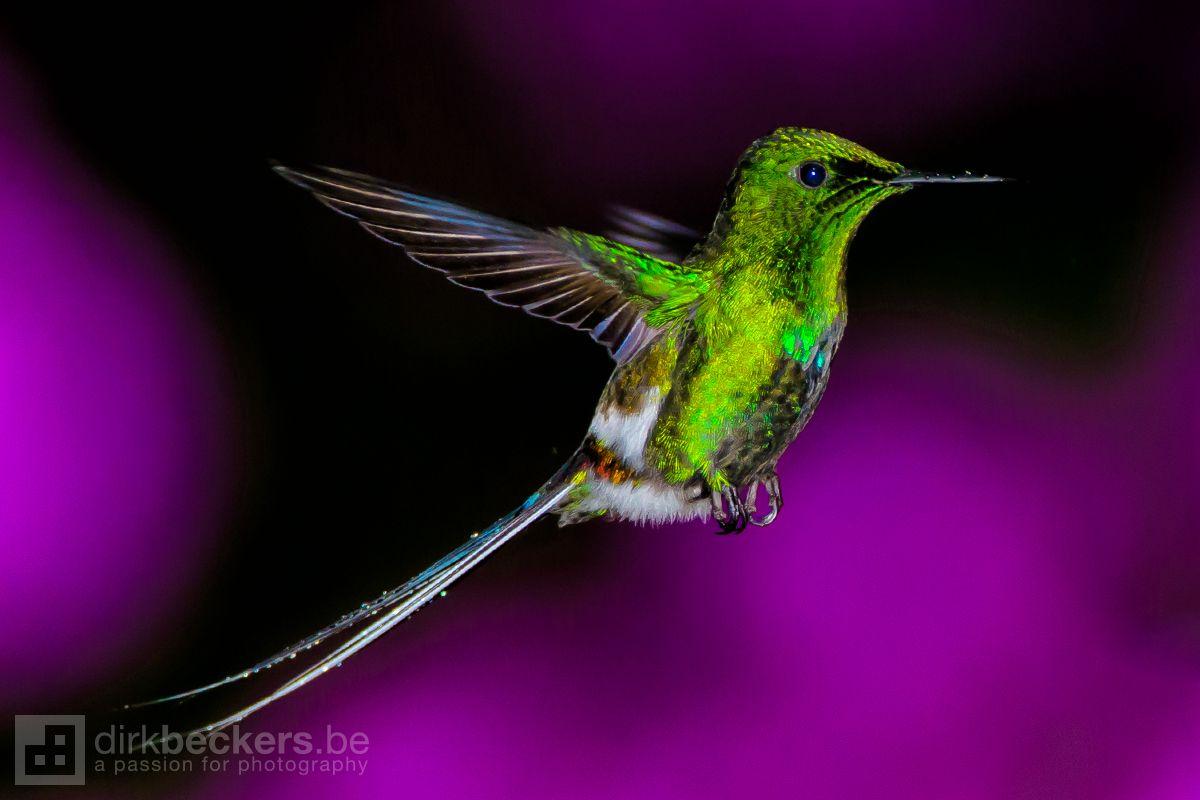 Freeze a Hummingbird (With images) Hummingbird