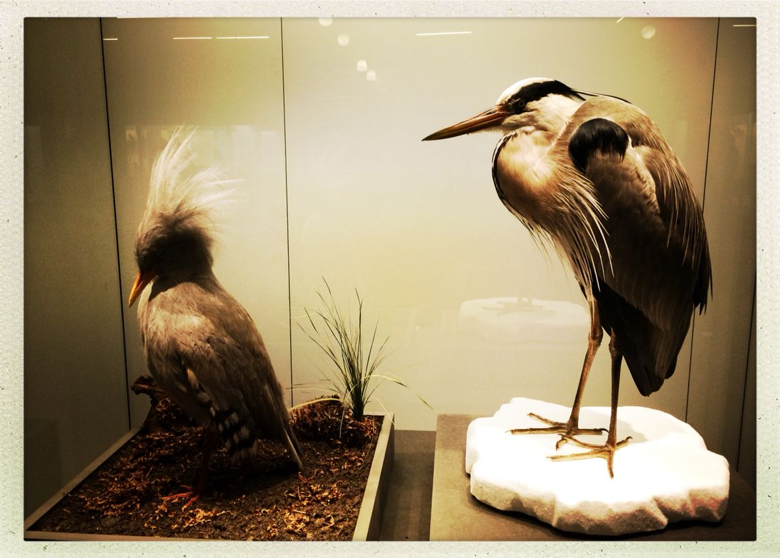 Heron natural history museum Berlin Museum exhibition