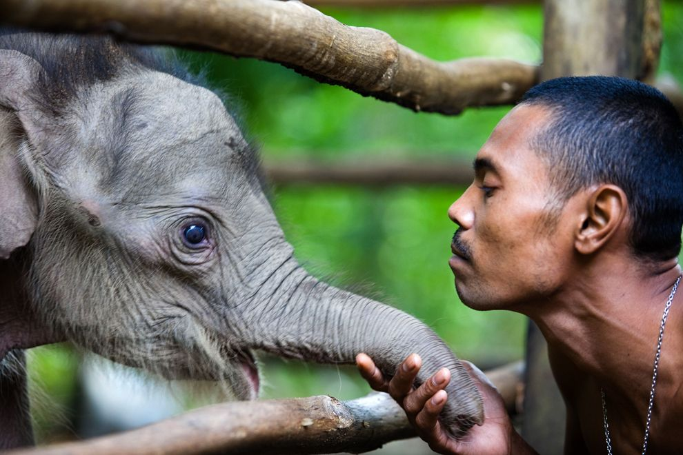 Animals And Their People Baby Elephant Pictures Animals Baby Elephant