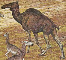 Megatylopus Ancient Animals Prehistoric World Prehistoric Animals
