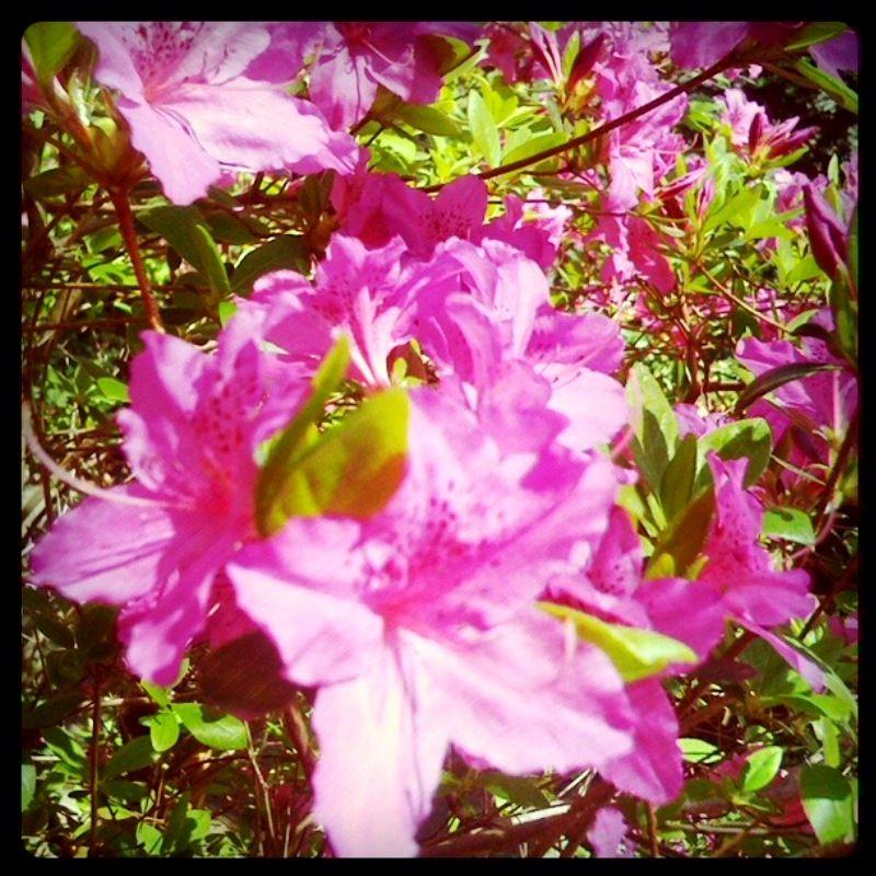 April 2 Color