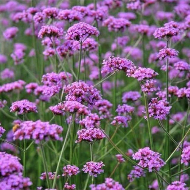1000Pcs Plant Flower Seeds for Beautiful Garden Decoration – 18seeds  1000pcs
